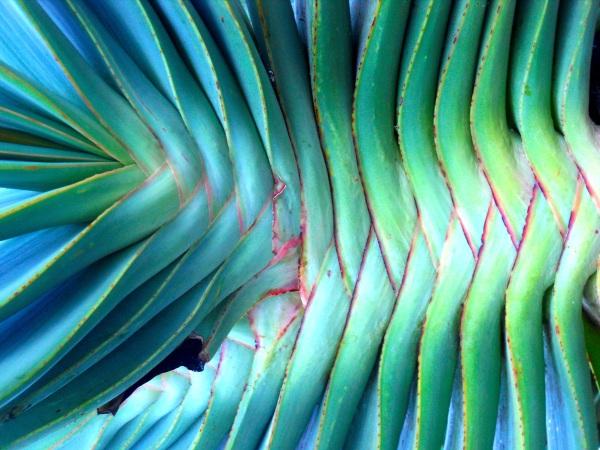 Amazing Succulent- 2