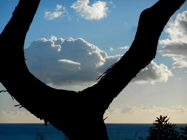Sea, Tree, Sky
