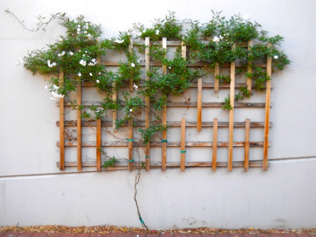 Green Arbor