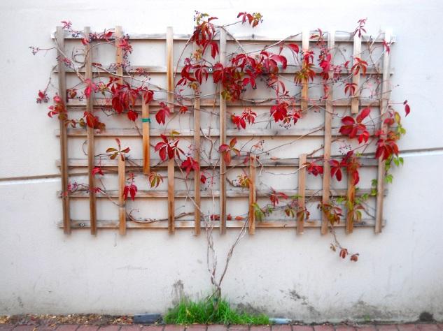 Red Arbor