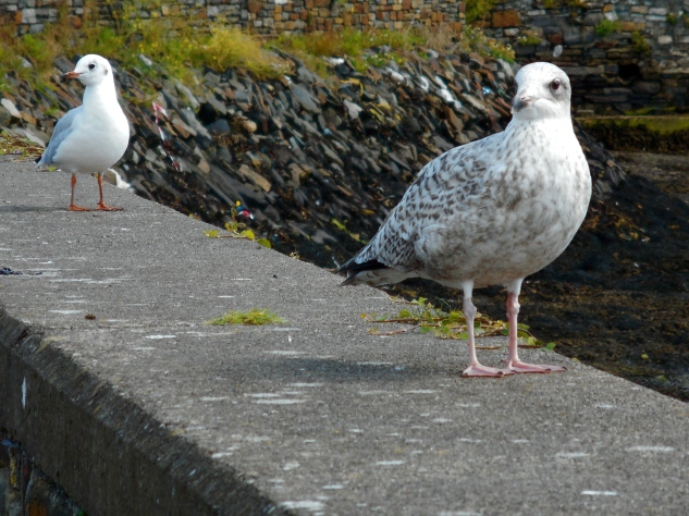 2 Birds on the Quay