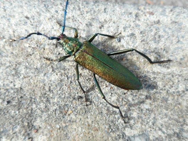 Big Beautiful Bug