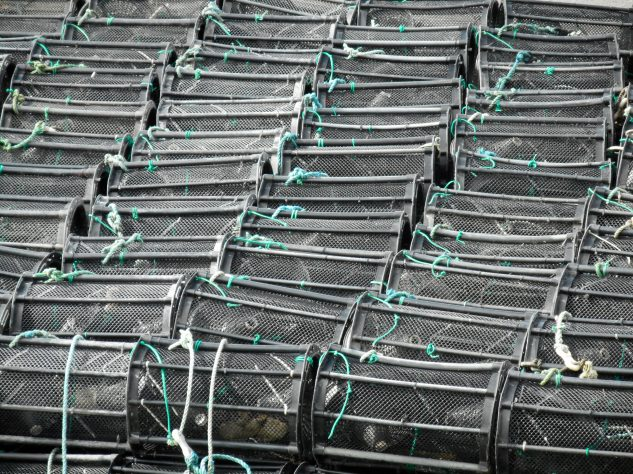 Array of Crab Pots