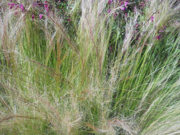 Grasses & Flowers